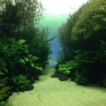 Forest under water