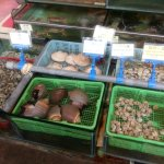 Some of the Live Sea food on offer