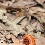 Foto de Phophonyane Falls Ecolodge and Nature Reserve