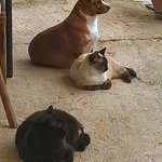 Restaurant dog and cats