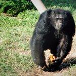 Fundació Mona, Centro de Rehabilitación de Primates