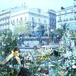 i fiori nella piazza