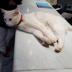 En mängd katter finns det, denna slappa katt hoppade upp på receptionsdisken & la sig tillrätta.