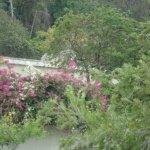 lovely vegetation