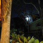Moonlight at Safari Surf
