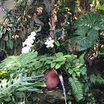 Beautiful orchid garden.  Birds would pose.  Dolphins would NOT