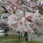 Foto de Potomac Park