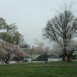 West Potomac Park area