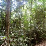 Wilderness Eco Safaris Tours - in thick forest, driving through rivers 7+ times