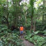 walking in the rainforest