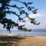 Photo of Amanohashidate