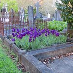 mid October - irises