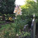 January - lilies