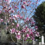 September - magnolia