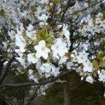 Photo of Ojima Komatsugawa Park