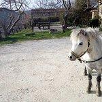 Photo of Agriturismo La Contessa Quarter Horse