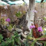 El rincón de las orquídeas rosas