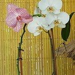 Unas delicadas pequeñas orquídeas