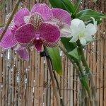 Unas orquídeas rosas y blancas