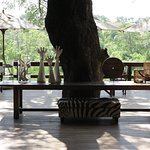 I loved my first experience on safari. The Londolozi Camps give you a feeling of privacy and exc