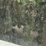mold on the window glass