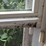 mold on the windows
