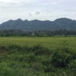 vast padi fields opposite Fairy Caves