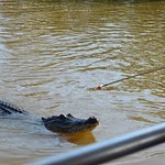 Turns out the gators have the same diet as the kids do!