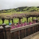 Large deck off the tasting room affords dramatic views of the property