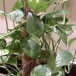 Nice plants!