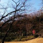 Meijijingu Gaien Foto
