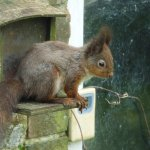 view of red squirrel from outside bedroom window