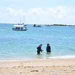 Sailaway Reef and Island Tours Foto