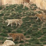 Terra Natura Foto