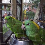 Polly and Olly the Parrot Dive Centre Parrots