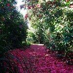 Parc Floral Les Camellias De La Prairie