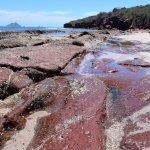 Foto de Deer Island (Isla de Venados)
