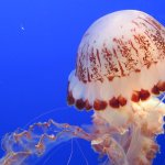 Beautiful jellyfish tanks.