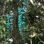 Turquoise Jade in trees