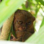 Photo of Philippine Tarsier and Wildlife Sanctuary
