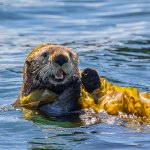 Galley Gourmet dinner cruises are a wildlife viewing tour, too.