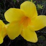Photo of Fleurs des Iles