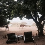 Deers outside the Beach Villa!