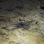 Underground insects are blind and harmless
