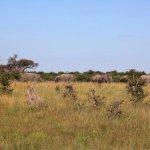 Foto de Savute Safari Lodge