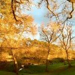 Vue sur l'étang du Megnos