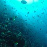 Living Colours Dive Resort-billede
