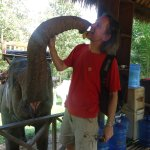 Photo of Elephant Village Sanctuary Day Trips