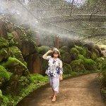 McBryde Garden Foto