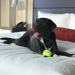Presidential Suite (and sweet new Kimpton ball!)